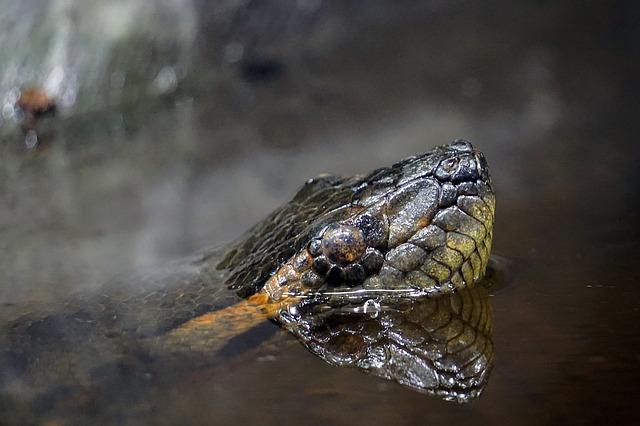 Schlange schaut aus dem Wasser