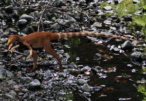 Kleiner, braun gestreifeter Dino am Bodem