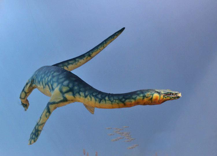 schlankes, schwimmendes Reptil mit Beinen und abenteuerlichen Zähnen