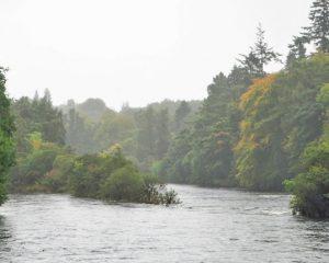 ein mittelgroßer Fluss im Wald mit einer bewachsenen Insel in der Mitte