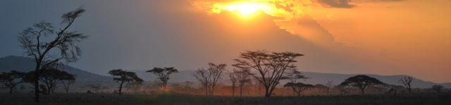 Sonne hinter dicken Wolken, vor denen bizarr geformte Bäume stehen