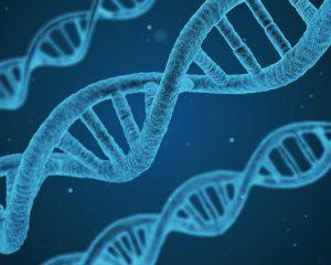 DNA-Phantome