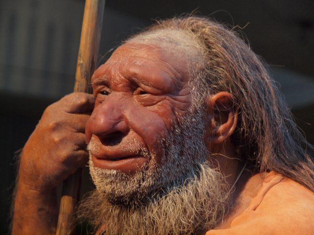 Portrait eines Modells eines älteren Neanderthaler-Mannes