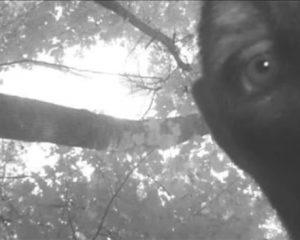 Angebliches Bigfoot-Foto