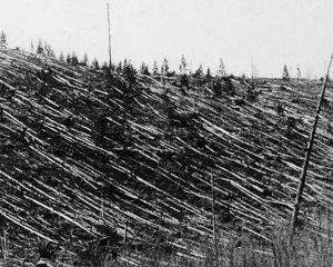 Schwarzweißbild mit unzähligen in eine Richtung umgeworfenen Baumstämmen