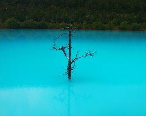 blaues Wasser mit einem abgestorbenen Baum