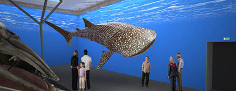 Modell eines Walhaies im Museumssaal