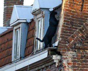 Der Panther von Armentières auf der Dachrinne