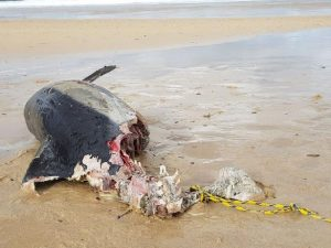 Toter Delfin am Stran
