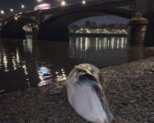 Der Battersea-Whale