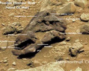 Jurassic Mars?