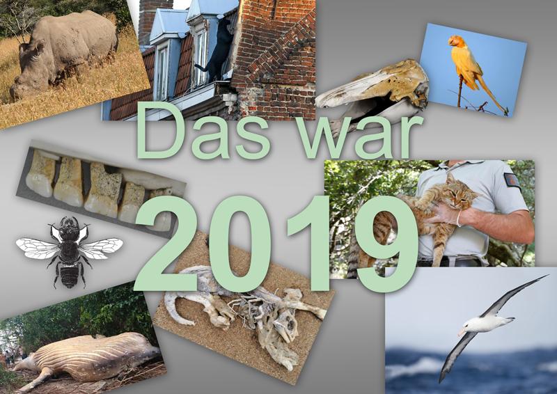 Das war 2019 - der kryptozoologische Jahresrückblick