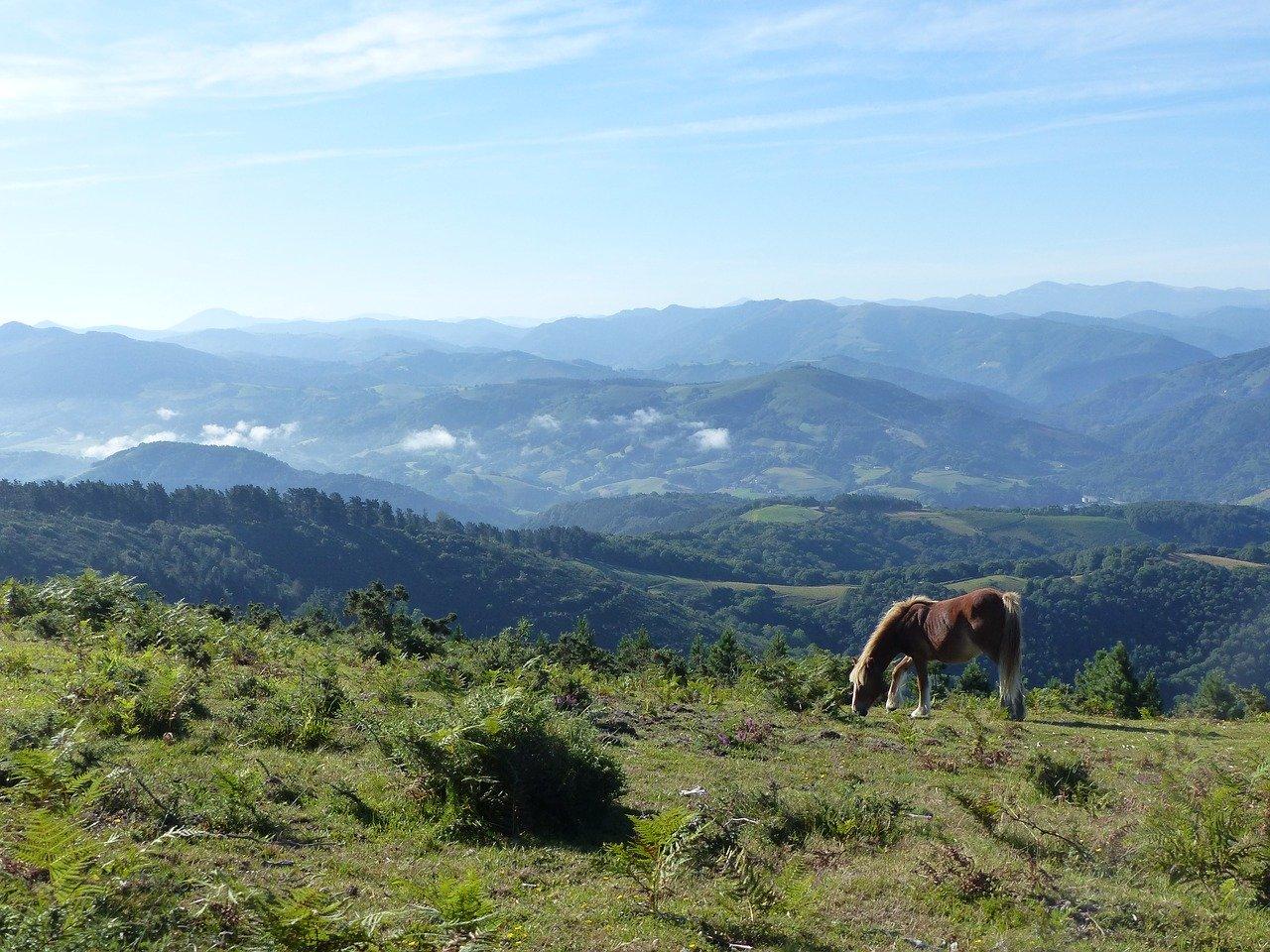 Berge und Weiden