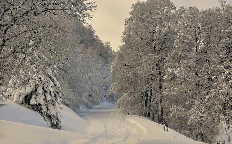 Lebt der Basajaun im Schnee?