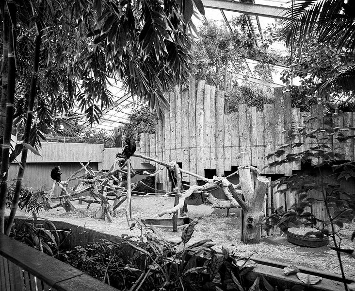 Das Affentropenhaus in Krefeld ist abgebrannt