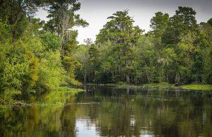 Oder ist das hier die Heimat des Honey Island Swamp Monsters?