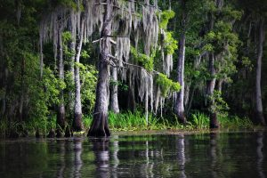 Kommt hier das Honey Island Swamp Monster vor?