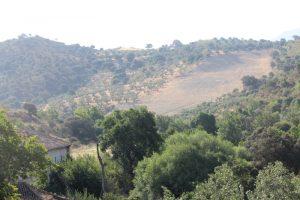 Landschaft mit Olivenhain