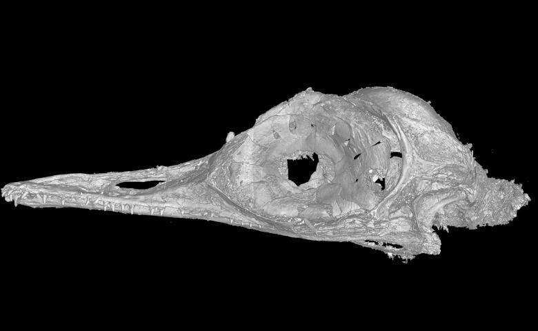 CT-Scan des Vogelkopfes
