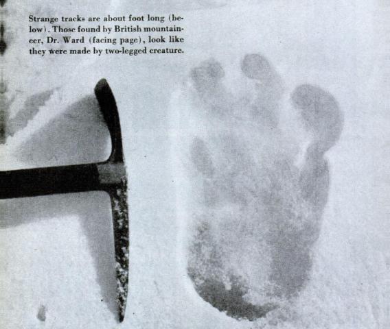 Das berühmte Shipton-Foto, ist der Almasty-Fuß ähnlich?
