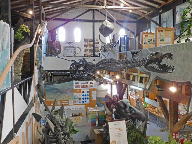 Überblick über die Ausstellung und den Elasmosaurus