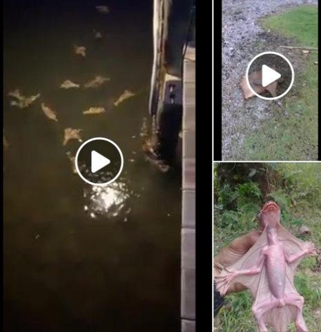 Hoax-Videos