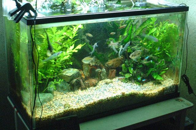 Bunte Fische hinter Glas, ein Hobby in Filzpantoffeln oder etwa nicht?