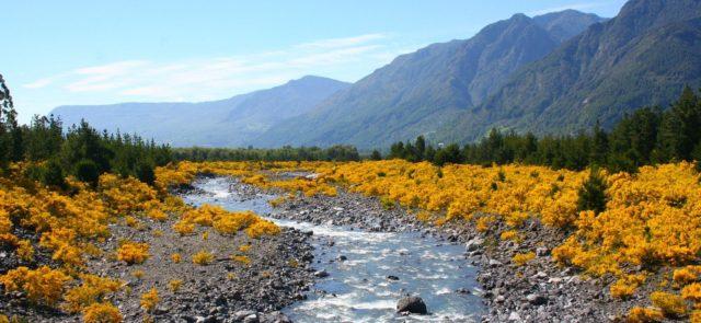 Ist das chilenische Hochland Heimat eines Wildmenschen?