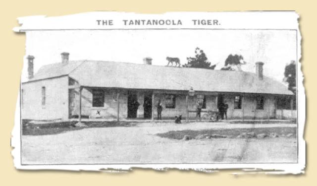 Tantalooga Tiger Hotel