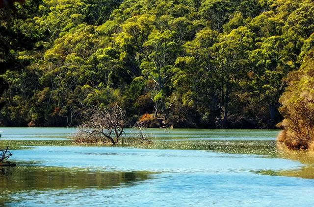 Tasmanische Landschaft