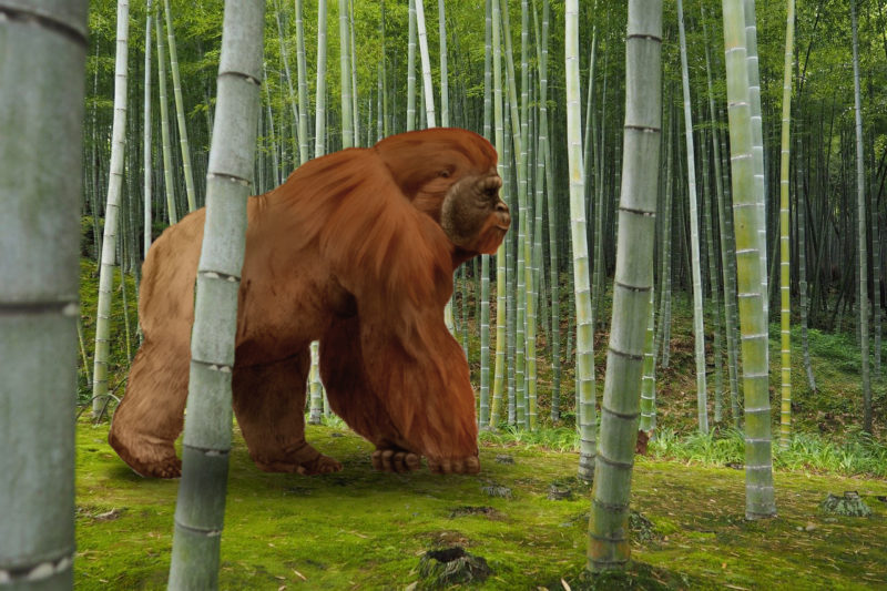 Gigantopithcus im Habitat