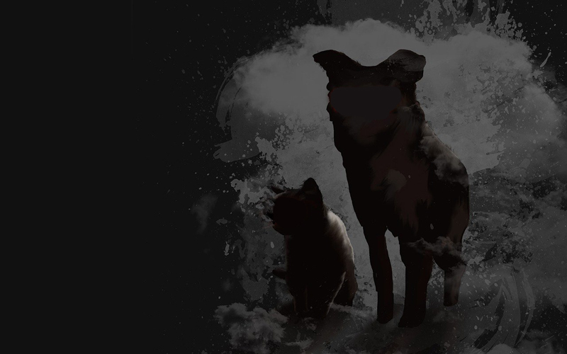 Schwarzer Hund schwarze Katze