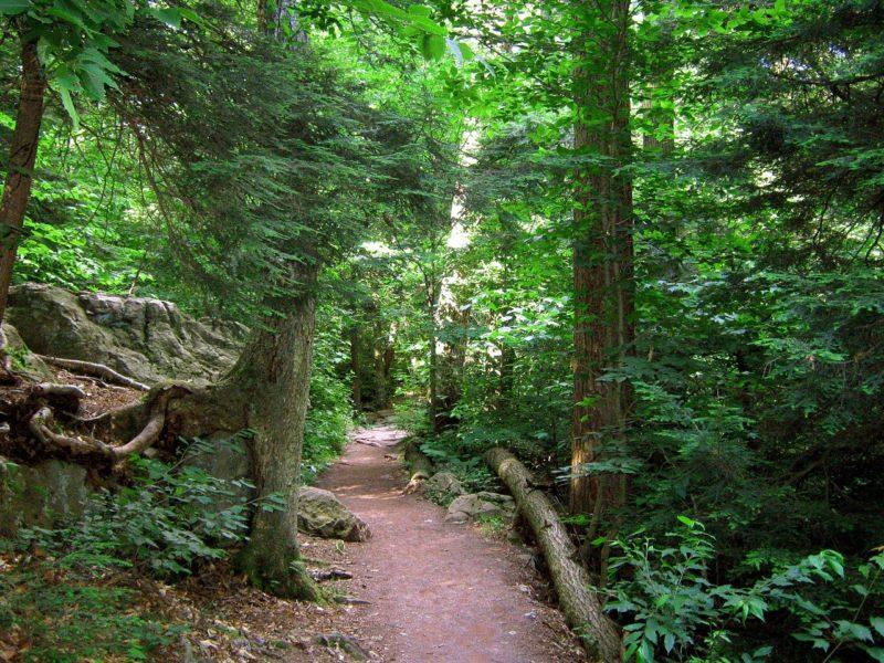 Wald in Pennsylvania