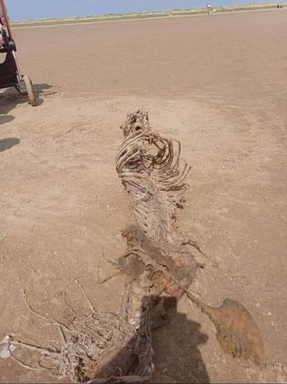 Meerjungfrau?