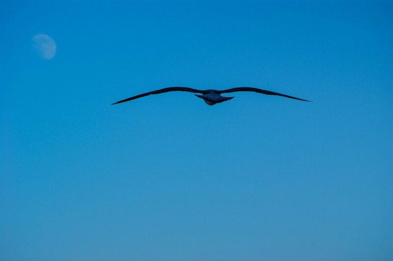 Thunderbird?