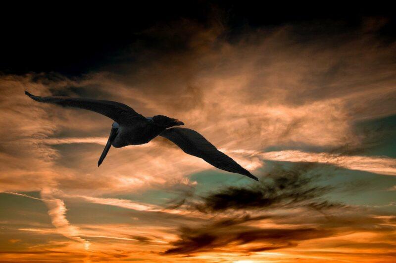 """Ist der Thunderbird """"nur"""" ein Pelikan?"""