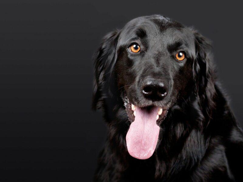 Nicht alle Phantomhunde sind schwarz