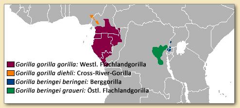 Menschenaffen: Verbreitung der vier Gorilla-Unterarten
