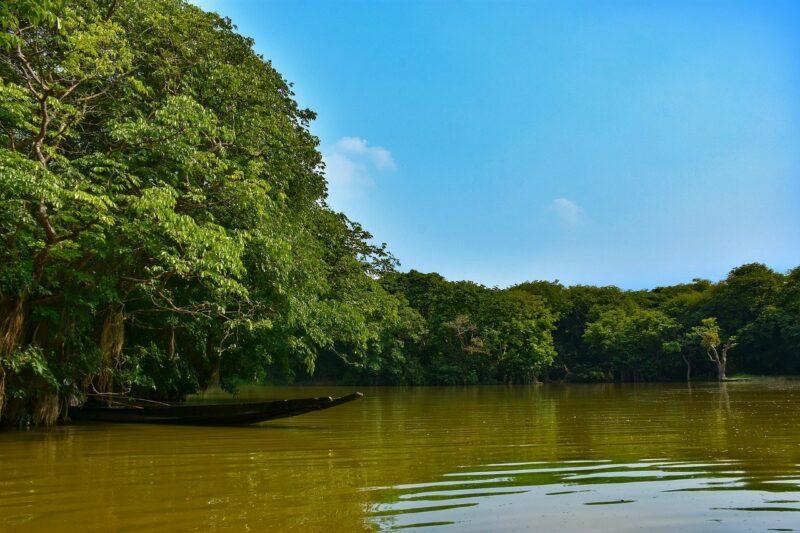 Regenwald-Ufer
