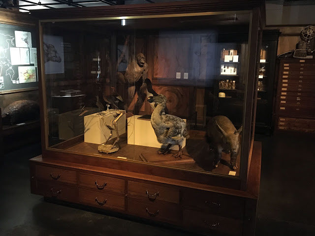 Modell des Dodos in Lyon