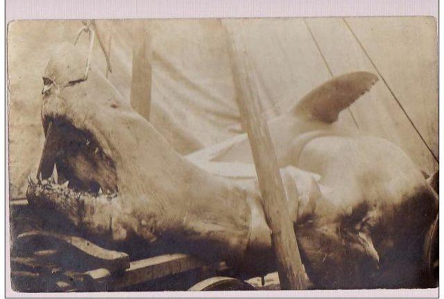 Hai von 1904